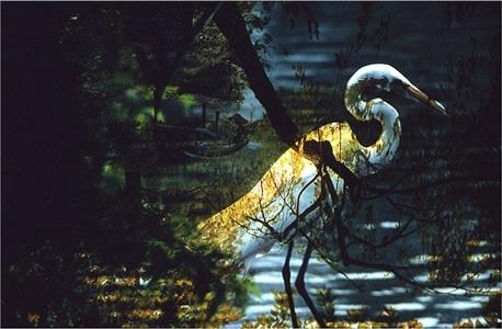 untitled (egret, brooklyn botanical garden) by leroy henderson