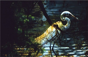 untitled (egret, brooklyn botanical garden) by leroy henderson