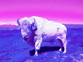 tatanka (buffalo) by dana claxton