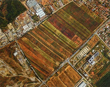 trapezoid farmer's cooperative by levente baranyai