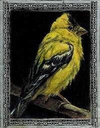 goldfinch / torpedo by ed musante