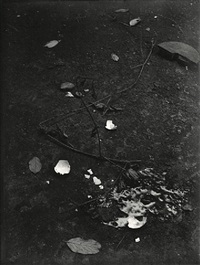 untitled (still life with branches and broken egg), 1950-54 by josef sudek