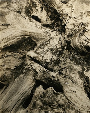 driftwood, 1926 by paul strand