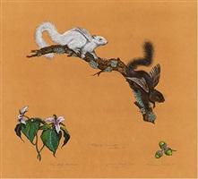 flying squirrels by james prosek