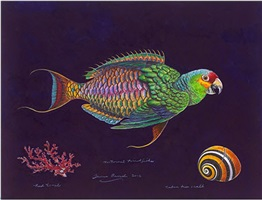 parrotfish nocturne by james prosek