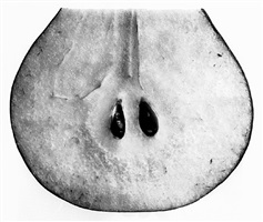 pear with seeds (a), new york by irving penn
