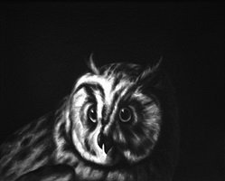 owl (after duranti) by shelley reed
