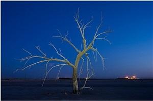 white tree 548 by gary faye