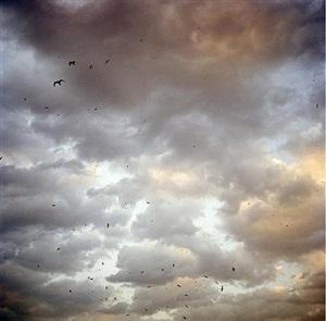 birds of bosphorous by olivia arthur