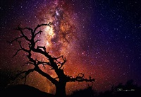 tree of the universe by peter lik