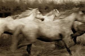 running horses by robert farber