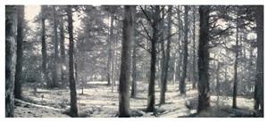 bosque i de la serie miradas by juan lara