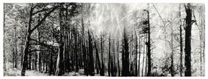 continuidad de los bosques i by juan lara