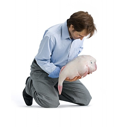 eulogy by patricia piccinini