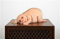 the listener by patricia piccinini