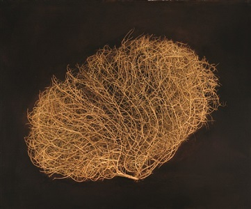tumbleweed avra valley road by kate breakey