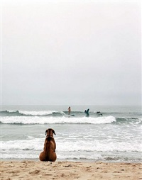 beach dog, montauk, ny by michael dweck