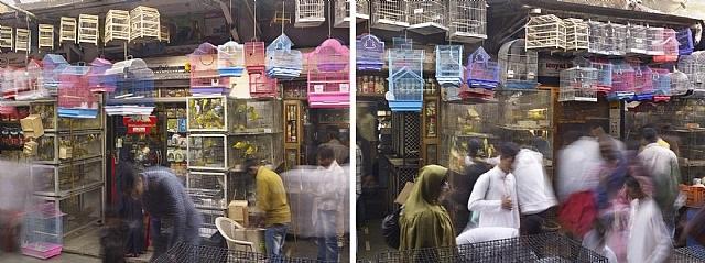 bird cages, crawford market, mumbai, india by peter steinhauer