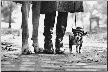 new york city, 1974 by elliott erwitt