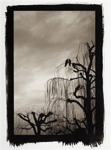 three crows, kyoto by sean perry