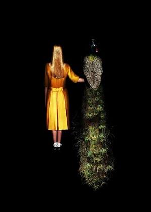 'an eye for an eye' smaller format by meryl donoghue