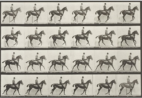 untitled plate 616 from animal locomotion by eadweard muybridge
