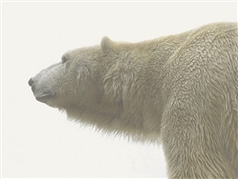 polar bear in fog by arnold zageris