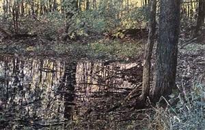 mystic woods by william nichols