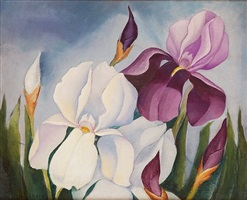 irises by henrietta shore