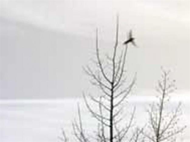 one bird, one tree (colorado) by lohner carlson