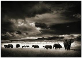 elephant herd by nick brandt