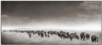 elephant exodus by nick brandt