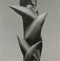 columna salomonica, sierra de puebla by mariana yampolsky