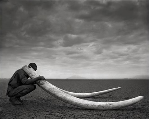 ranger with tusks of killed elephant amboseli by nick brandt