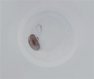 stain no.15 by zhu yu