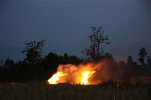 the fire (from primitive project) by apichatpong weerasethakul