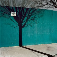 tree shadow by miska draskoczy