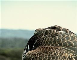 round falcon by liza ryan