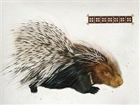 north american porcupine by scott kelley