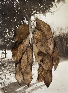 leaves ii (the couple) by anni leppälä
