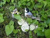 the golden coins in the forest by karen kilimnik
