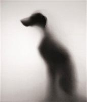 show of shadow by william wegman