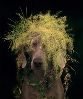 rousseau by william wegman