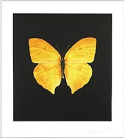 the souls on jacob's ladder take their flight (large yellow) by damien hirst