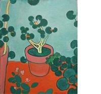 geraniums by robert mcintosh