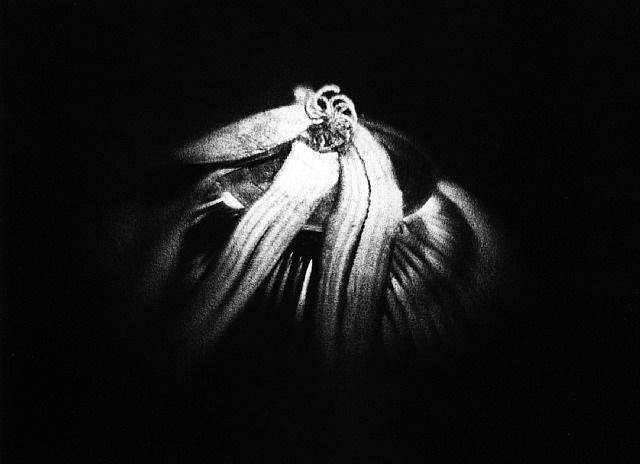 caméra obscura n°65 by luzia simons