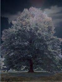 scenapse #10 (berkshire nocturne) by aziz and cucher