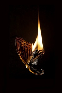 burning butterfly 14 by mat collishaw