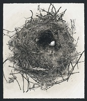 nest by sarah gillespie