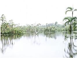 nature. amazonas i by kino acosta